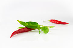 Petite red chili Royalty Free Stock Images