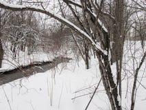 Petite rivière avec des arbres en hiver Images libres de droits