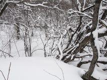 Petite rivière avec des arbres en hiver Images stock