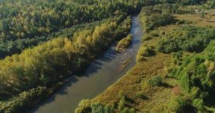 Petite rivière avec des forêts banque de vidéos