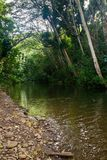 Petite rivière sur Kauai Photos stock