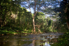 Petite rivière sur Kauai Image stock