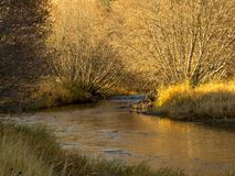 Petite rivière traversant des arbres d'automne Image stock