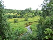 Petite rivière, usines et beaux arbres Photographie stock