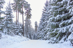Petite route de campagne en hiver - Suède Images stock