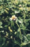 Assignment files. A small thin flower stock photo