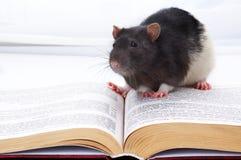 Petite souris Photographie stock libre de droits