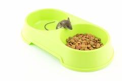 Petite souris dans une cuvette verte avec des aliments pour chats Images libres de droits