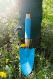 Petite spatule bleue sur l'herbe photographie stock libre de droits