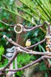 Petite tête jaune de rouge d'oiseau Image libre de droits