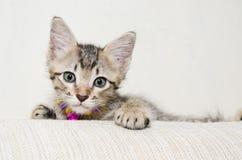 Petite Tabby Kitten mignonne Photographie stock libre de droits