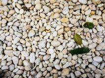 Petite texture de fond de pierres Photo stock
