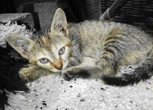 petite tigresse photo stock