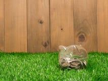 Petite tirelire derrière une petite correction d'herbe fraîche Photographie stock