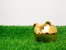 Petite tirelire derrière une petite correction d'herbe fraîche Or porcin Photo stock