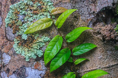 Petite usine de feuilles s'élevant sur l'arbre Image libre de droits