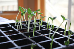 Petite usine de jeune plante Photographie stock