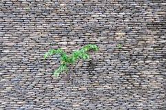 Petite usine sur le mur de roche Photo libre de droits