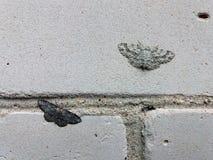 Petite vague poussiéreuse de deux mites différentes de couleur se reposant sur le mur de briques et illustrant un principe de sél images stock