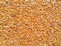 Petite yellow lentils,mung beans or mung dahl stock images