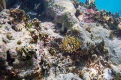 Petites anémones en récif Images stock