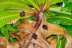 Petites battes accrochant dans l'arbre Photographie stock