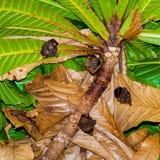 Petites battes accrochant dans l'arbre Photo stock