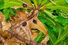Petites battes accrochant dans l'arbre Photographie stock libre de droits