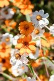Petites belles fleurs Photographie stock libre de droits
