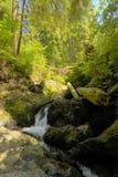 Petites cascades à écriture ligne par ligne dans la forêt tropicale Photos libres de droits