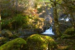Petites cascades à écriture ligne par ligne et forêt tropicale Images libres de droits