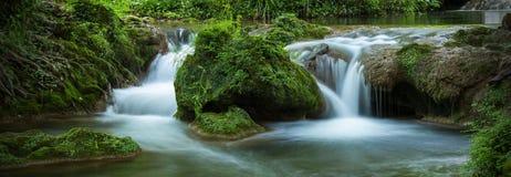 Petites cascades avec de l'eau entrant dans la forêt photographie stock libre de droits