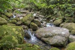 Petites cascades parmi les roches moussues vertes Photographie stock