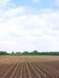 Petites collectes dans l'horizontal rural images stock