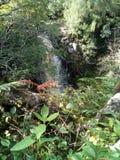 Petites collines de cascade de Brodick photographie stock