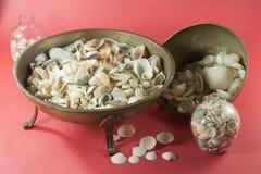 Petites coquilles de mer dans des pots en verre et des pots de fer Photographie stock