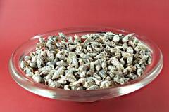 Petites coquilles de mer dans un pot en verre Photos stock