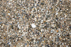 Petites coquilles de mer, parc d'émeu Photo stock