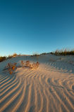 Petites empreintes de pas d'oiseau sur la dune images libres de droits
