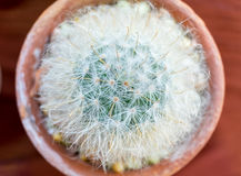 Petites espèces de cactus dans le vase brun Photographie stock libre de droits