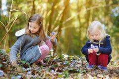 Petites filles adorables sélectionnant les premières fleurs du ressort dans les bois la belle journée de printemps ensoleillée Photos libres de droits