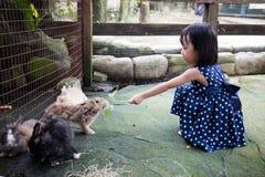 Petites filles chinoises asiatiques alimentant des lapins Photo libre de droits