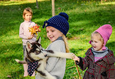 Petites filles jouant avec le chiot enroué en parc Images stock