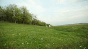 Petites filles marchant le pré près de la forêt clips vidéos