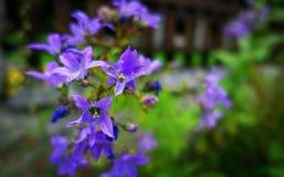 Petites fleurs images stock
