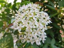 Petites fleurs Photographie stock libre de droits