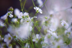 Petites fleurs blanches Image stock