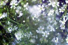 Petites fleurs blanches Image libre de droits