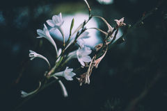Petites fleurs blanches Photos stock