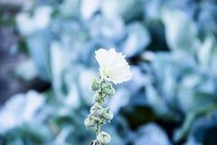 Petites fleurs blanches avec le fond vert photos libres de droits
